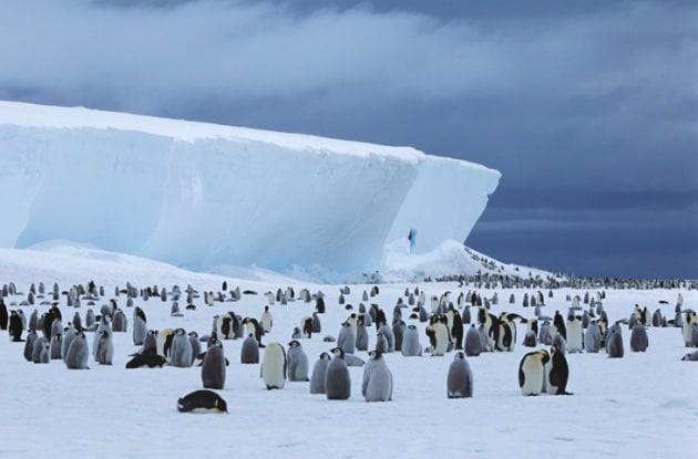 Pinguini imperatori: un futuro incerto per colpa del global warming