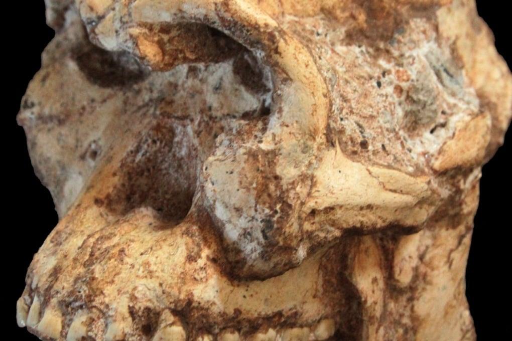 In Sudafrica il più antico antenato dell'uomo?