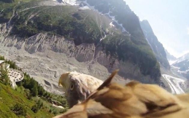 La caccia di un'aquila in soggettiva