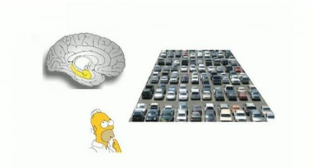 Come il cervello ci dice dove siamo