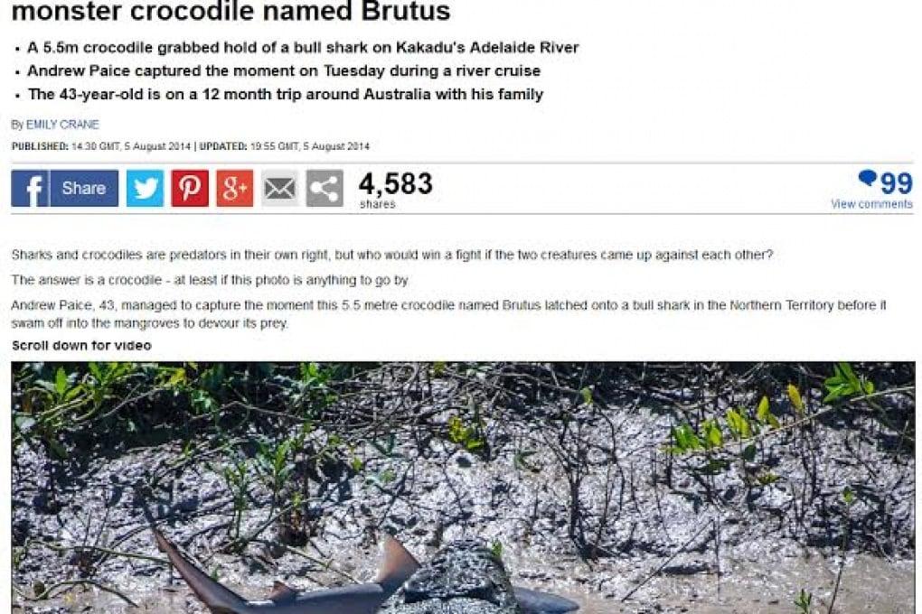 Lo squalo e il coccodrillo, una lotta all'ultimo morso