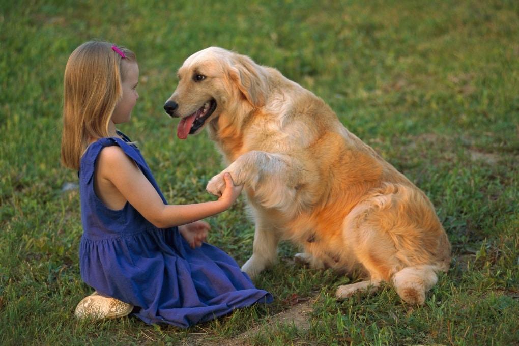 Ecco come i cani capiscono quello che diciamo
