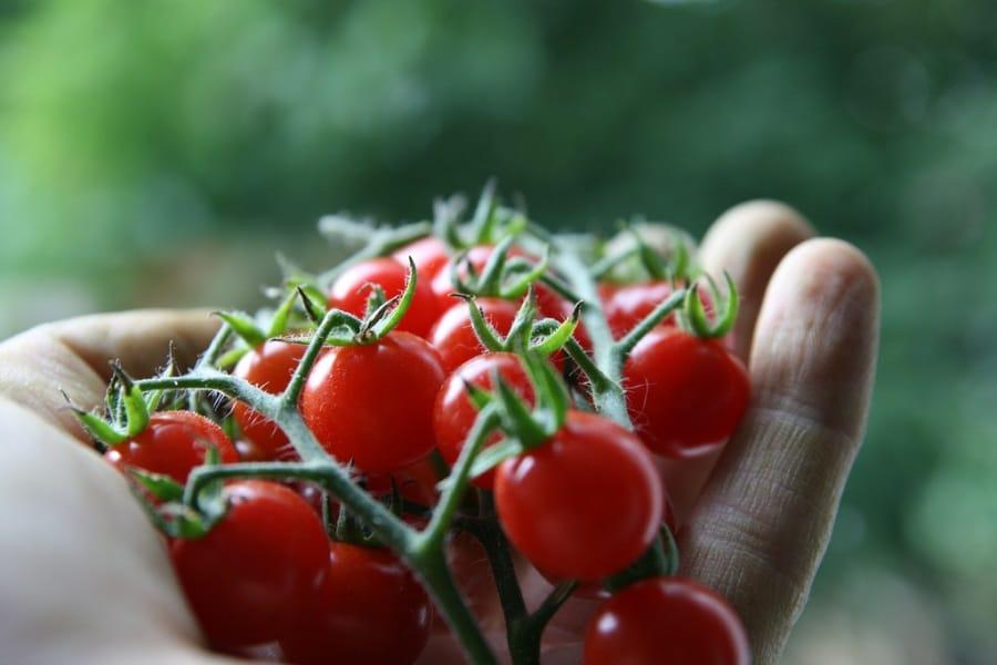 11 cibi velenosi... che mangiamo abitualmente