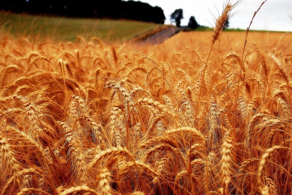 Gli effetti dei cambiamenti climatici sull'agricoltura del Mediterraneo