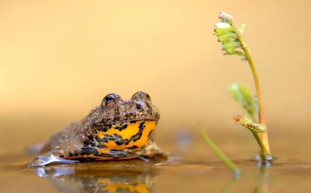 La biodiversità italiana in pericolo