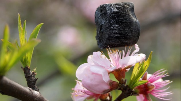 aerogel-on-flower-stamen