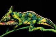 camaleonte-body-painting