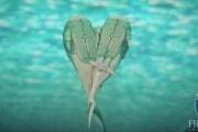 fish-fossils