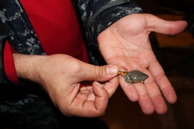 Un bambino di sei anni scopre una nuova specie di mini-rana