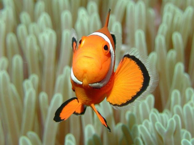 15 pesci (più uno!) con talenti inaspettati