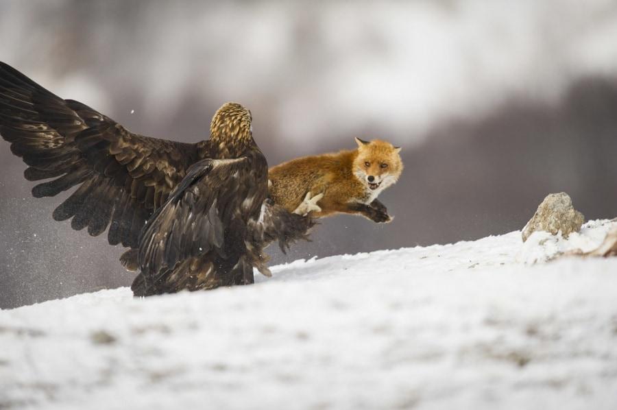 Animali le bugie storiche sugli animali - Uccelli che sbattono contro le finestre ...