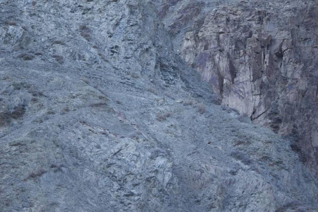 Chi l'ha visto? Trova il leopardo delle nevi