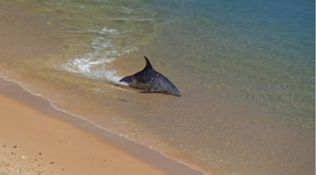 I delfini cacciano con l'aquaplaning