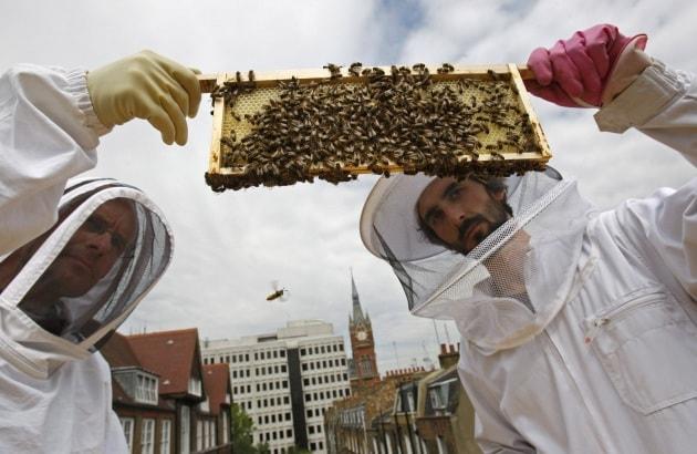 london-bees_custom-0793bdf6af7b3116ecb5f0cb0d8fecc63a3eaa23