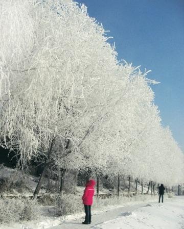 Il bello del gelo