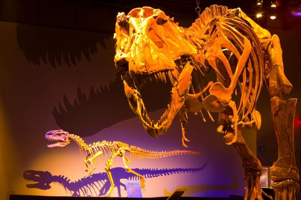 Il sangue dei dinosauri non era né caldo né freddo