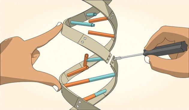 Nasce la terapia genica riparativa