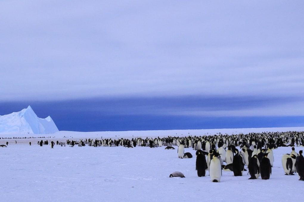 La fisica dell'abbraccio dei pinguini imperatori
