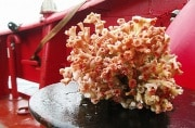 corallofreddo