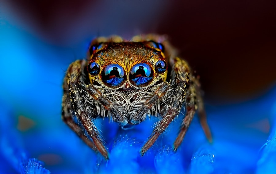 eye-first