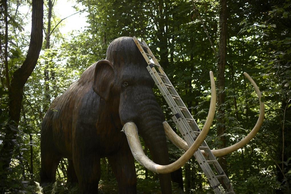 Mammut, un passo più vicini alla clonazione