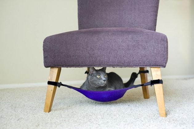Da felini selvatici a gatti domestici. Si vede nel DNA