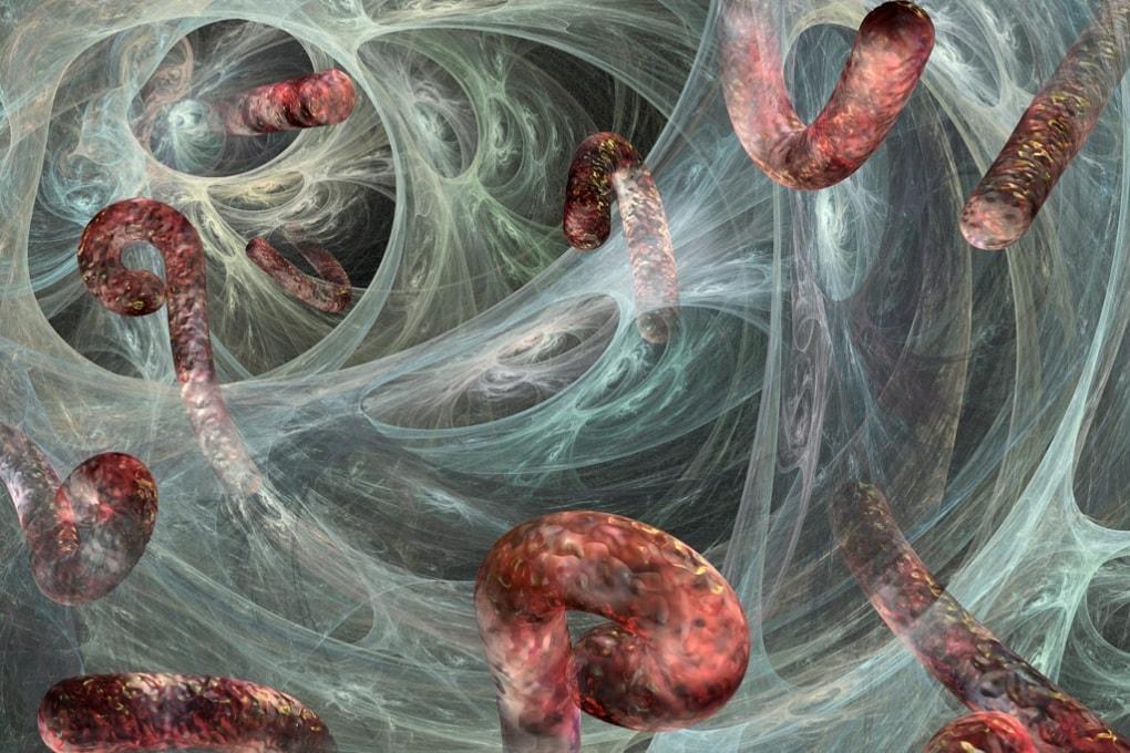 Quali danni provoca il virus Ebola?