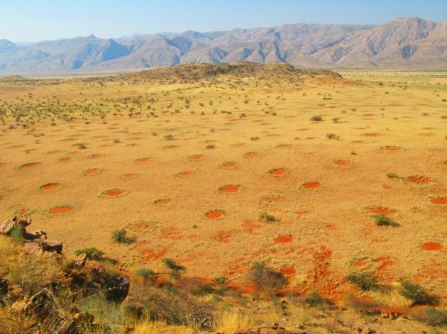 Cerchi delle fate in Namibia: sono davvero opera delle termiti?