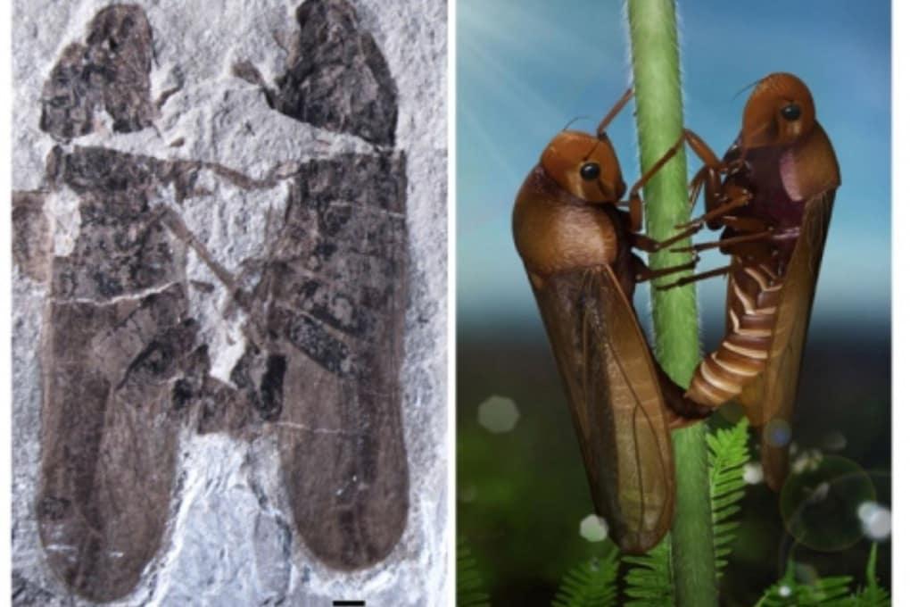 I fossili di insetto che fanno sesso dal Giurassico