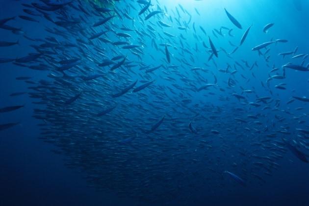 Quanti pesci ci sono nel mare for Quanti deputati ci sono