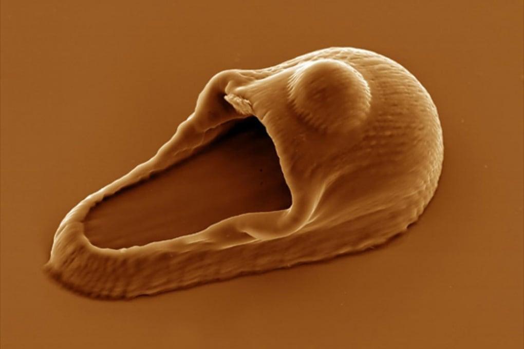 Nanoarte: pantofola per atomi molto pigri.