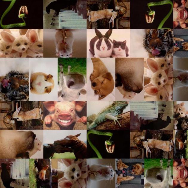 I concorsi di iFocus: Animali in casa