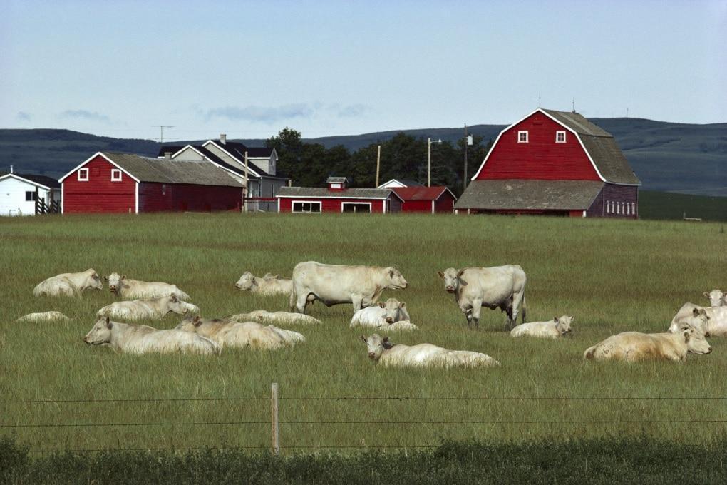 Il prezzo ambientale della carne