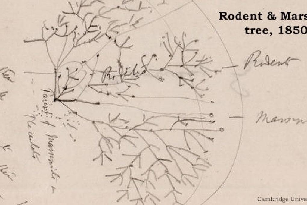I manoscritti originali di Darwin disponibili online