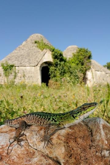 Paludi e squame: rettili e anfibi d'Italia