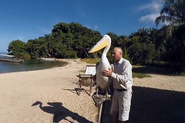 beak-cam-pelican2.650x0_q85_crop-smart