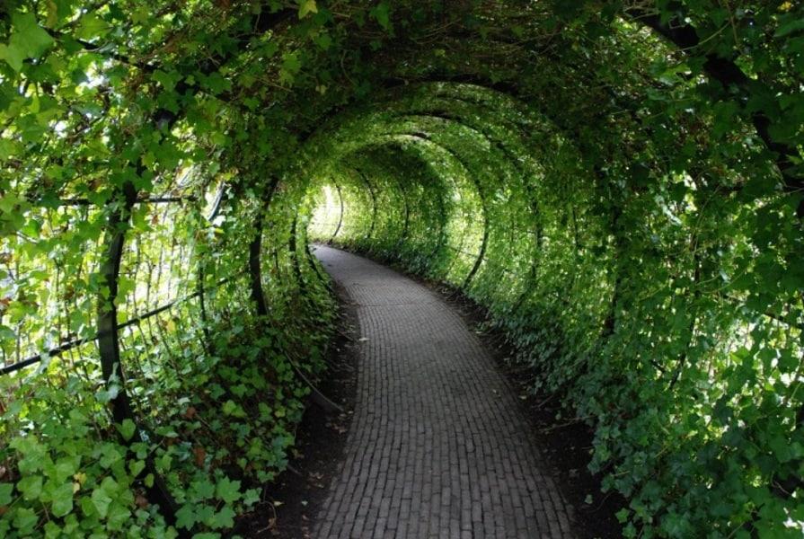 mw_poison_garden_tunnel__1072x0_q85_upscale