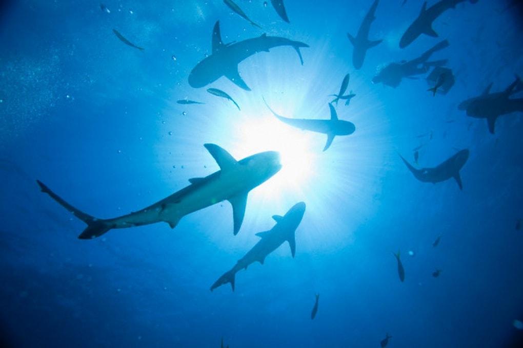 Quanto è dura la pelle degli squali?