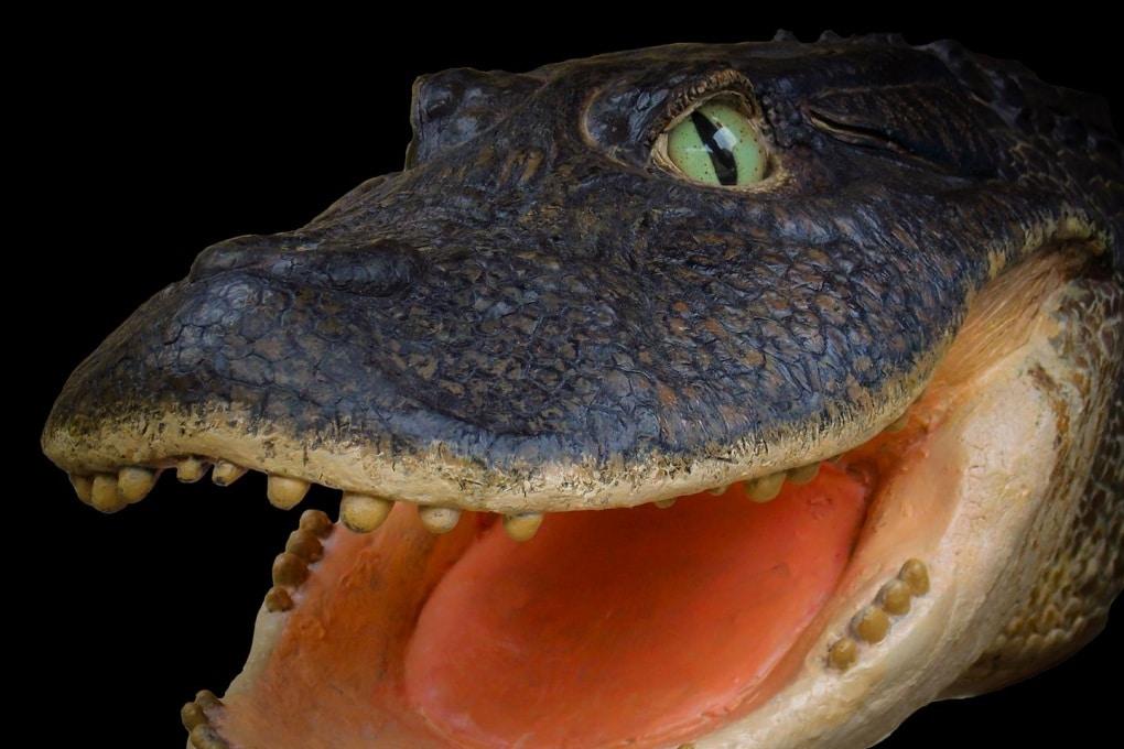 I coccodrilli dominavano nel Perù preamazzonico