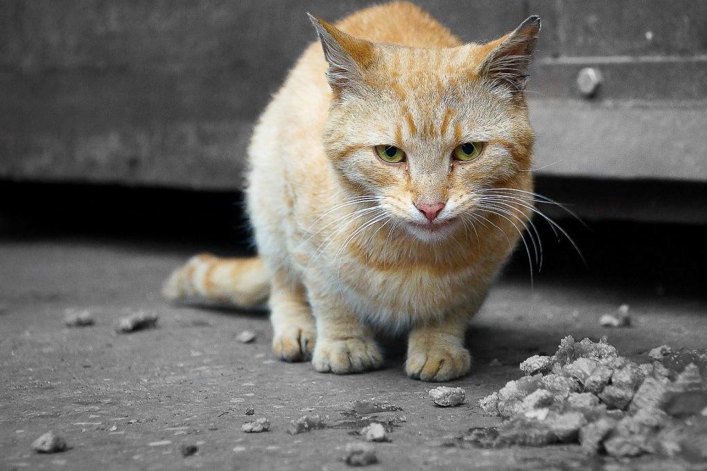 Il tuo gatto? Non ti capisce, e ti teme