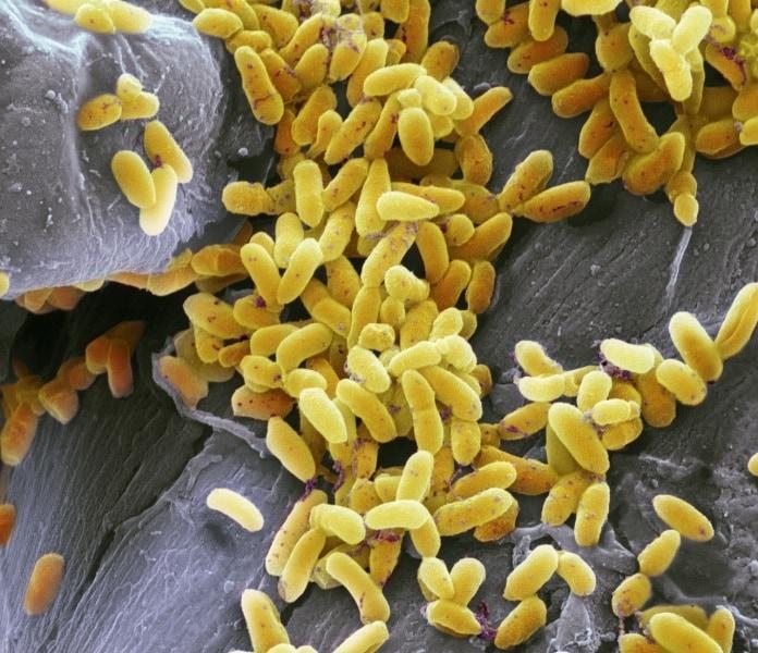 quanti germi ci sono nel mondo