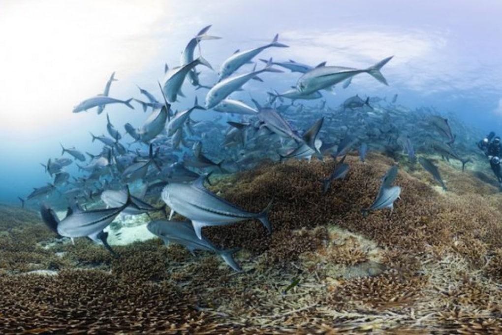Un tuffo tra le barriere coralline più belle del mondo