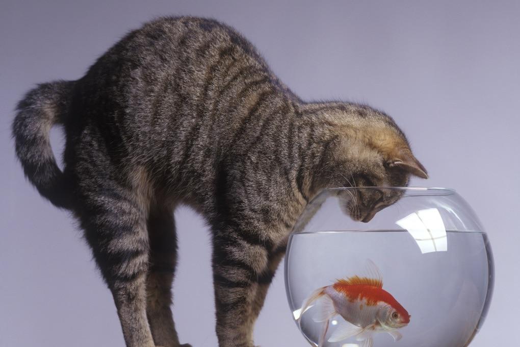I pesci emettono flatulenze?