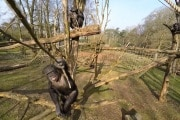 chimp-drone_3263885k