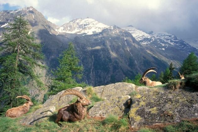 I parchi nazionali più belli d'Europa