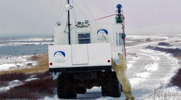 Google Street View per gli orsi polari
