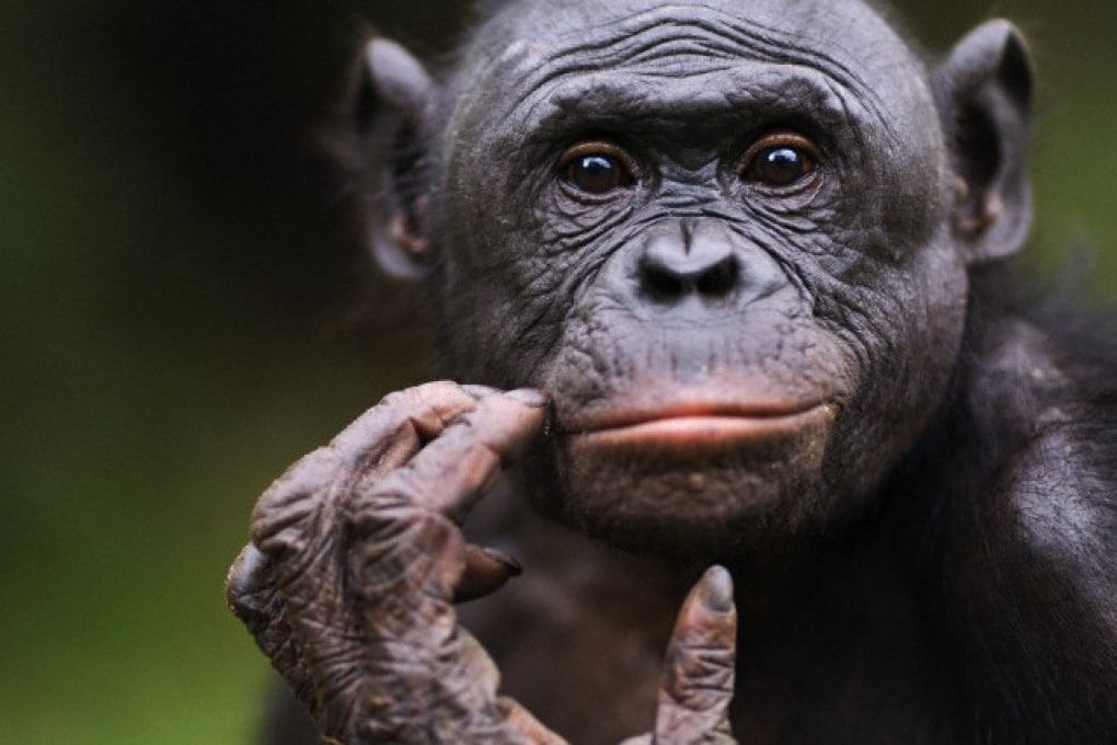 Esiste il sesso orale tra gli animali?