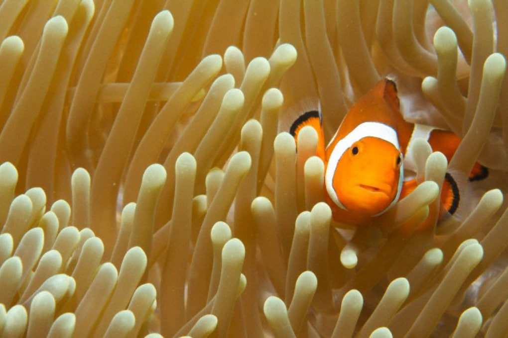 I pesci possono diventare sordi?