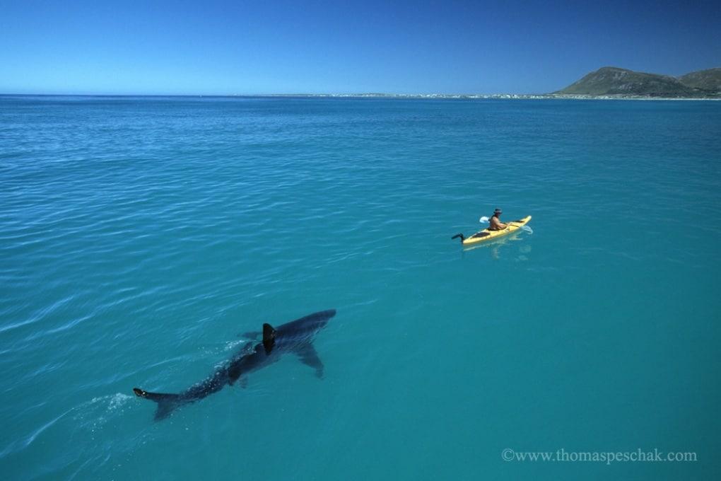 Lo squalo e la canoa: i segreti di una delle foto più virali del web