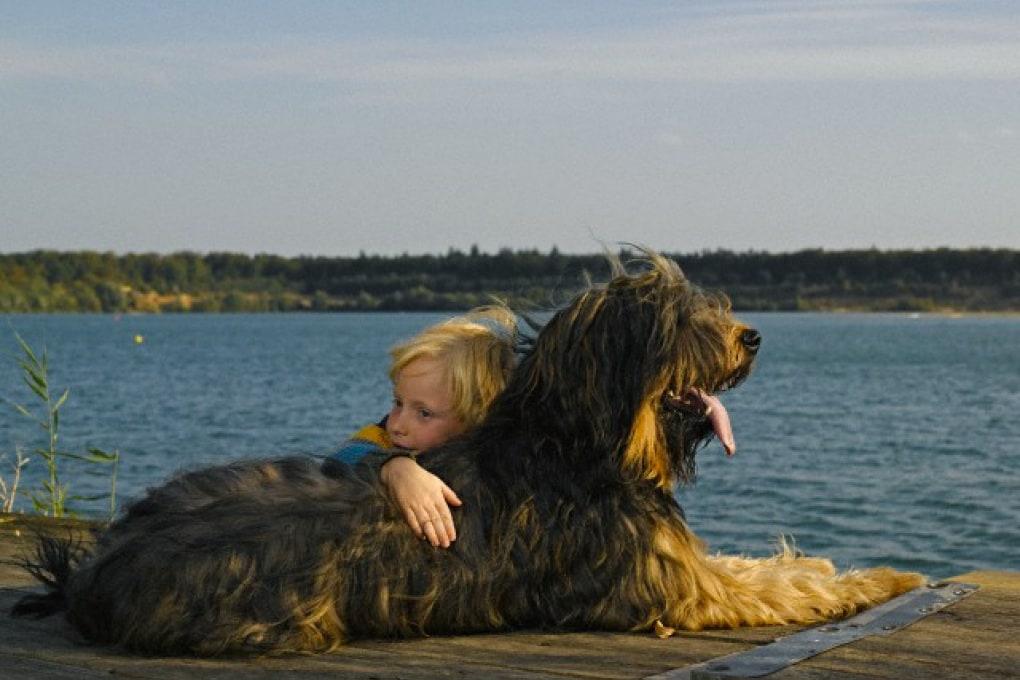 Il cane è il miglior amico dell'uomo. Contro le allergie